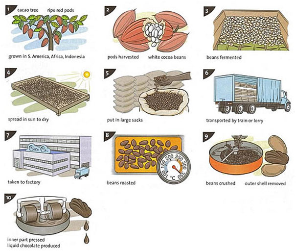 The Illustrations Show How Chocolate Is Produced
